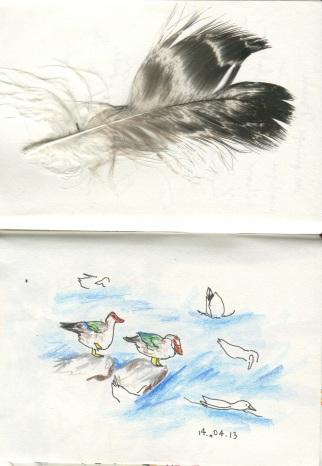 canards de Barbarie